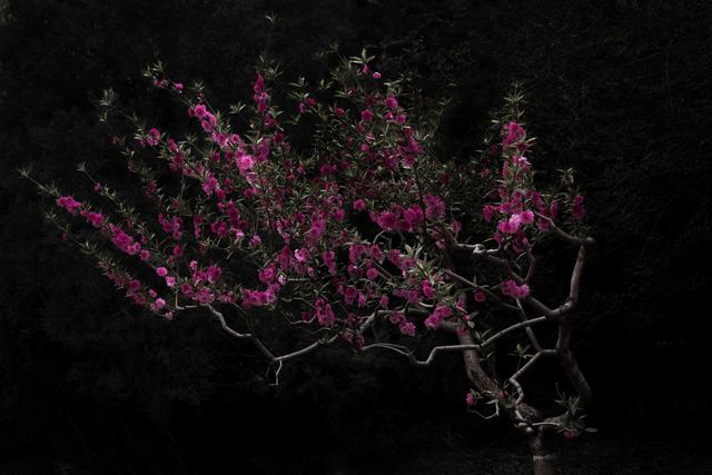, 'Peach Tree,' , SinArts Gallery