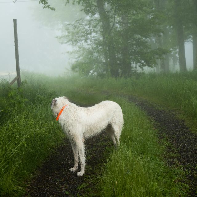 , 'Wolfhound,' 2012, photo-eye Gallery