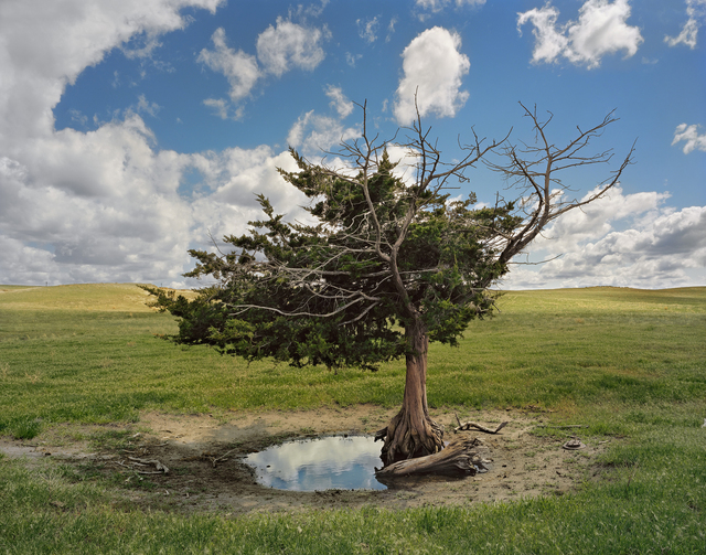 , 'Homesteaders Tree, Cherry County, Nebraska,' 2011, Kopeikin Gallery