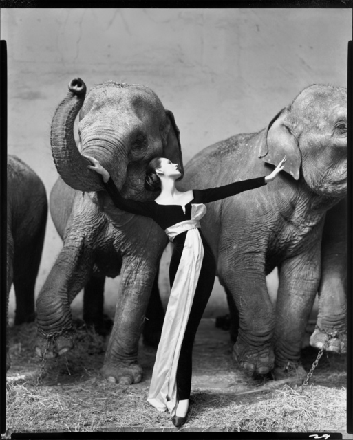 , 'Dovima with Elephants, Evening Dress by Dior, Cirque d'Hiver, Paris, France,' 1955, Fraenkel Gallery