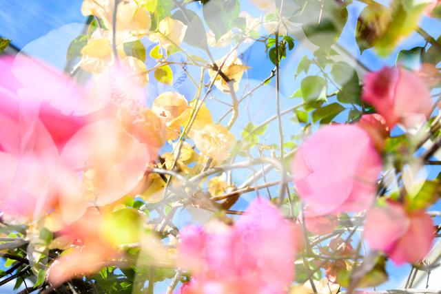 Dolly Faibyshev, 'Filigree on Leaf and Vine', 2018, Photography, Digital c-print, Uprise Art