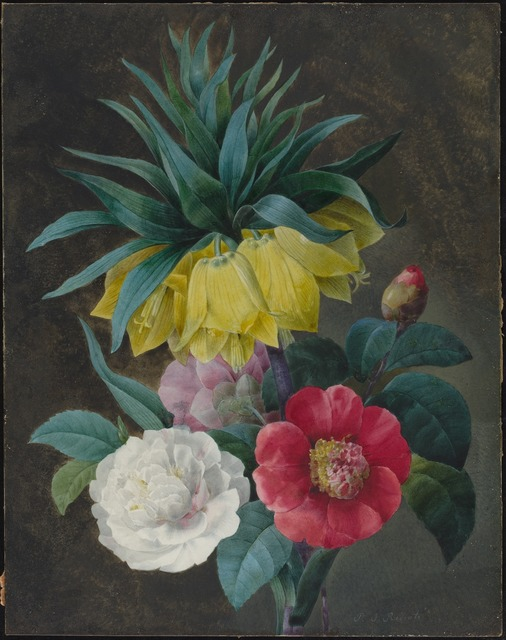 Pierre Joseph Redouté, 'Four Peonies and a Crown Imperial', National Gallery of Art, Washington, D.C.