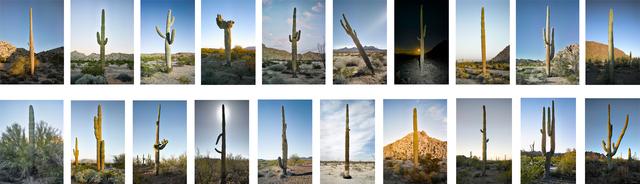 , '20 Saguaros in Metal Tin,' 2016, Lisa Sette Gallery