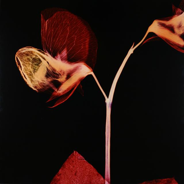 , 'Leave,' 2003, Galerie Krinzinger