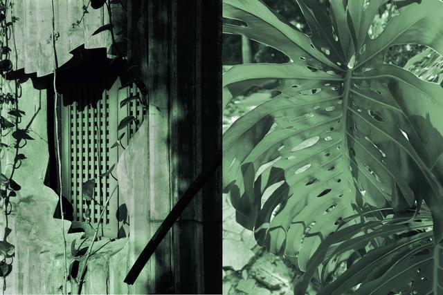 , 'Ladeira da Misericórdia, Monstera Deliciosa,' 2016, Christopher Grimes Gallery