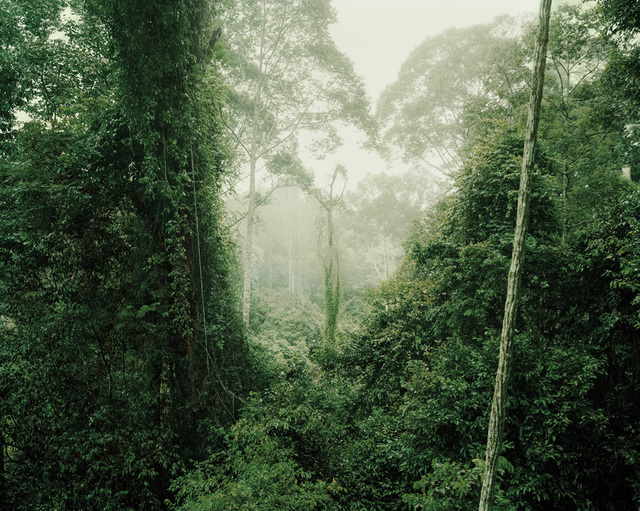 , 'Primary forest 16, dusk,' 2012, Galerie f5,6