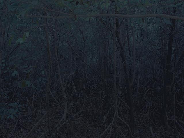, 'Mangroves,' 2014, Carrie Secrist Gallery