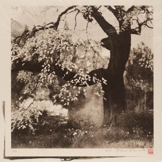 , 'Black Ship Cherry Tree in Achi-mura, Nagano,' 2015, Micheko Galerie