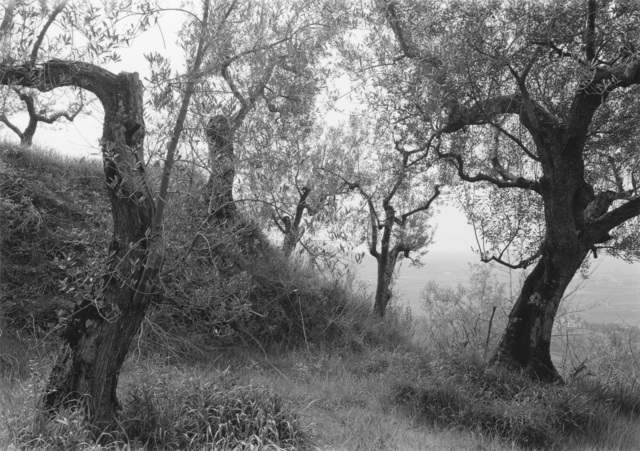 , 'Tuscan Trees #1,' 1996, Wirtz Art