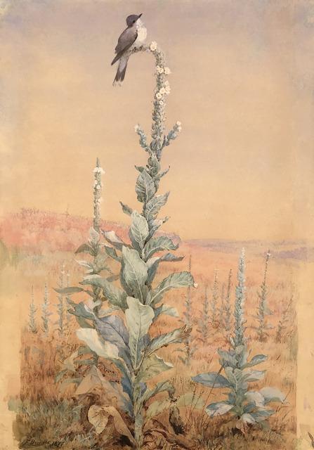 Fidelia Bridges, 'Summer Song – Kingbird on Verbascum stalk ', 1877, Caldwell Gallery Hudson