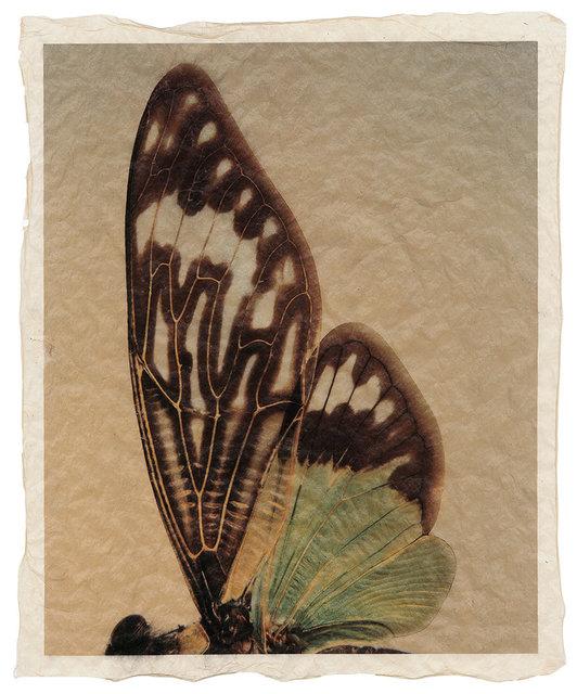 Gregor Törzs, 'à la couleur – Wing Wing 10', 2018, Print, Archival pigment print on Gampi paper, Galerie Commeter / Persiehl & Heine