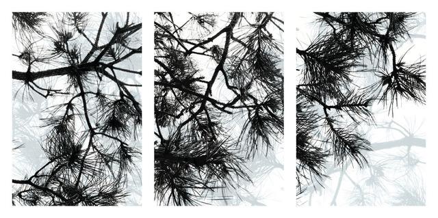 , 'Pine Triptych,' 2016, Cross Mackenzie Gallery
