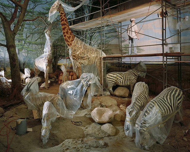 Richard Barnes, 'Academy Animals From Animal Logic', 2004, Bau-Xi Gallery