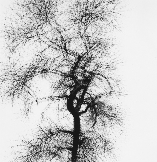 Harry Callahan, 'Multiple Exposure Tree, Chicago', 1956, Pace/MacGill Gallery
