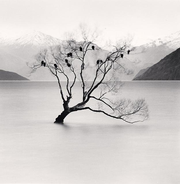 Michael Kenna, 'Wanaka Lake Tree, Study 2, Otago, New Zealand', 2013, photo-eye Gallery