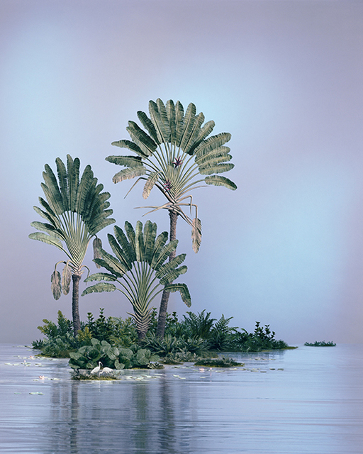 , 'Traveler Palms,' 2014, Julie Saul Gallery