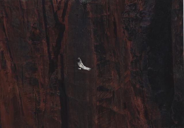 , 'Untitled (Condor),' 2012, Sies + Höke