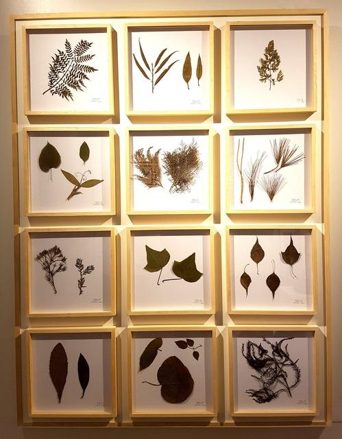 Teresa Cabo, 'La Naturaleza no se atrapa, Panel III', 2018, ACCS Visual Arts