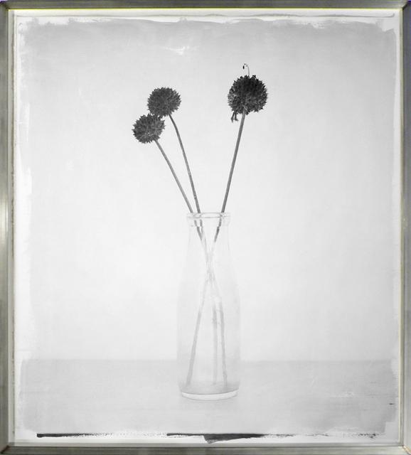 , 'Wilde dagga,' 2010-2011, HackelBury Fine Art