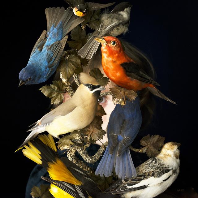 , 'Birds of New England,' 2016, Robert Mann Gallery