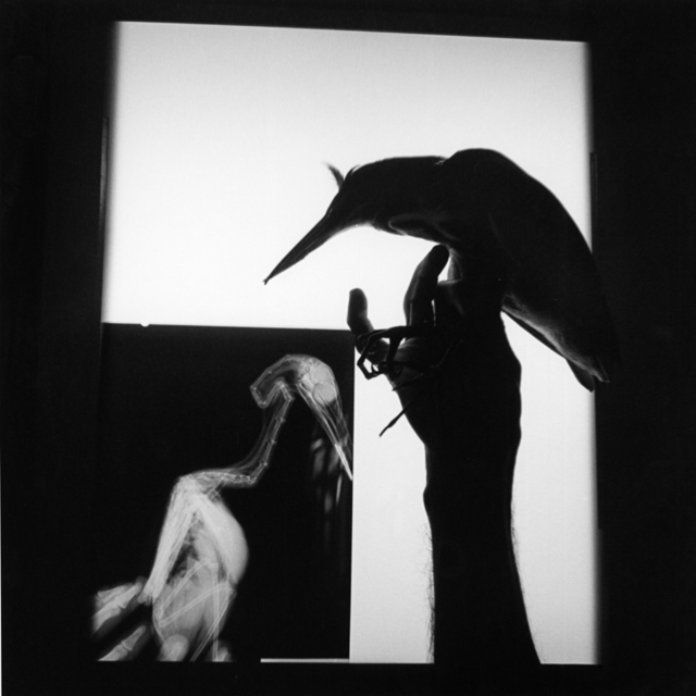 , 'Radiografía de un pájaro. Oaxaca. México,' 1999, Rafael Ortiz