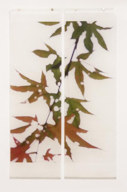 Jeri Eisenberg, 'Momji No. 2', 2014, Kathryn Markel Fine Arts