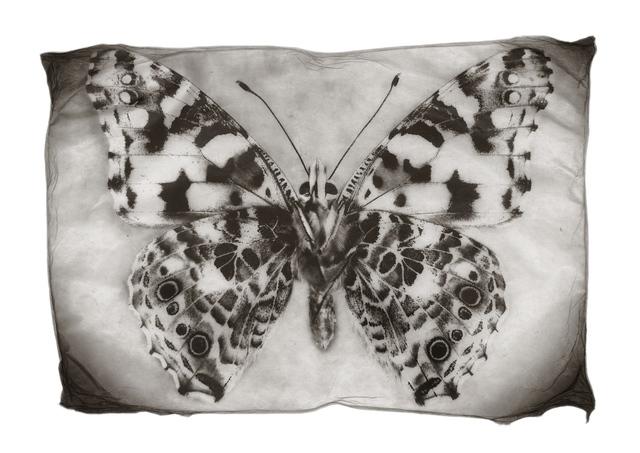 , 'Schmetterling,' 2014, Galerie Commeter / Persiehl & Heine