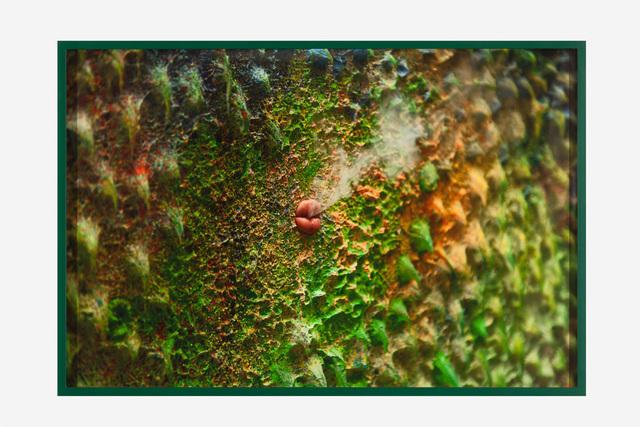 , 'Study #3 (green lips),' 2016, Galerie Laurent Godin
