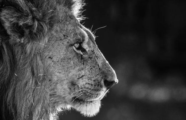 David Yarrow, 'Savute', 2019, Photography, 315gsm Hahnemuhle Photo Rag Baryta Paper, Isabella Garrucho Fine Art