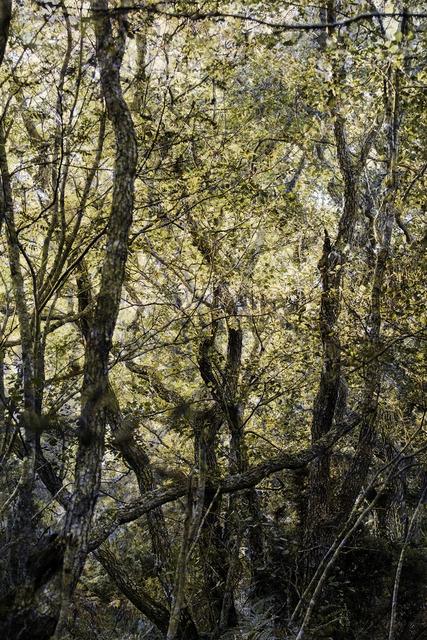 , 'Forest #29,' 2016, Galerie Anhava