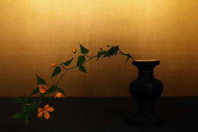 , 'japanese kerria,' 2017, Galerie Marie-Robin