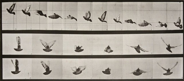 , 'Animal Locomotion: Plate 755 (Pigeon in Flight),' 1887, Huxley-Parlour