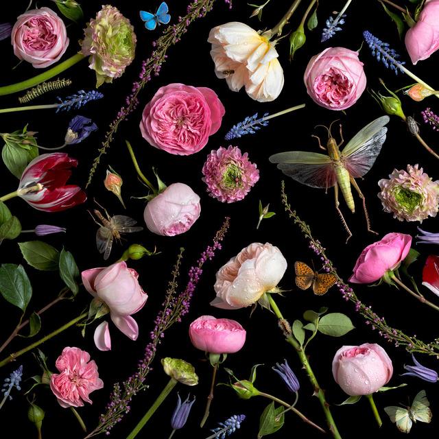 , 'Botanical VI (Juliet Roses),' 2013, Robert Klein Gallery