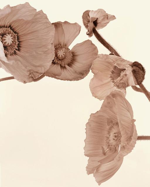 , 'Mohn-11D_SbSAg,' 2003, Galerie f5,6