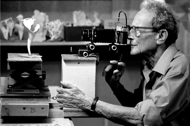 Nomi Baumgartl, 'Anatomy of Nature, Work in Progress I, Andreas Feininger, New Milford, Connecticut', 1989, Photography, Gelatin Silver print, Ira Stehmann Fine Art Photography