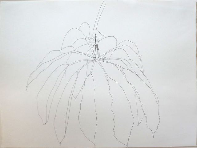 , 'Tropical Plant, Santa Domingo,' 1981, Vivian Horan Fine Art