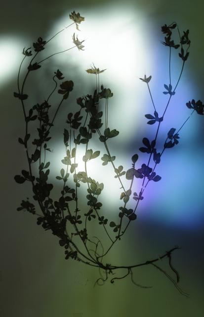 , 'Herbier populaire II,' 2017, Galerie Laurence Bernard