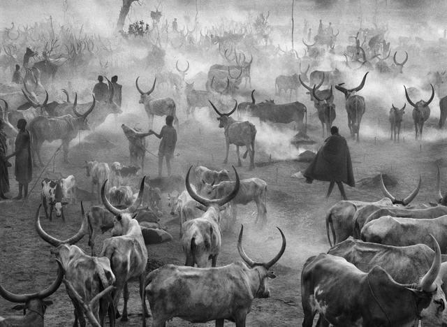 , 'DINKA CATTLE CAMP OF AMAK, SOUTHERN SUDAN,' 2006, Huxley-Parlour
