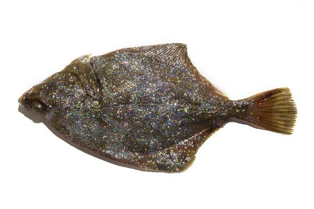 , 'Microplastic III / Disco fish,' 2016, Anna Laudel