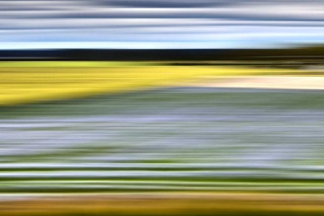 , 'Lavender Weeds, Sweden,' 2014, Heather Gaudio Fine Art