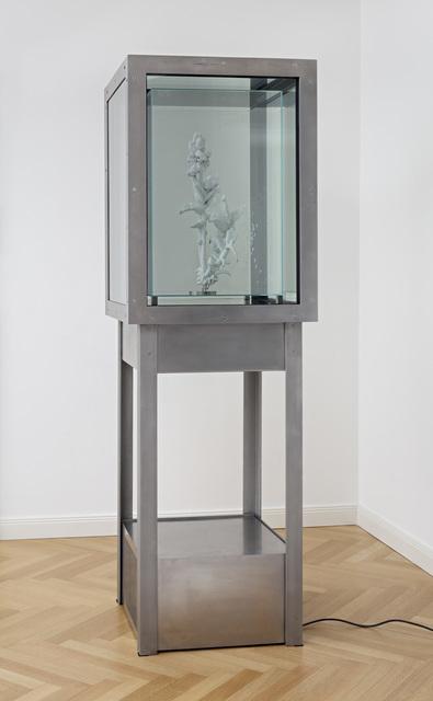 Julian Charrière, 'Tropisme', 2015, DITTRICH & SCHLECHTRIEM
