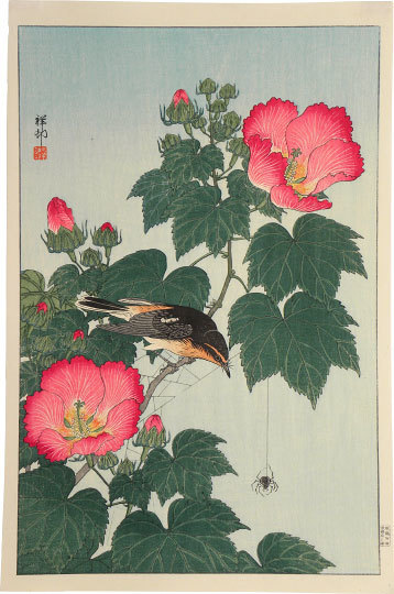 Ohara Koson, 'Fly-catcher on Rose Mallow Watching Spider', ca. 1932, Print, Woodblock print, Scholten Japanese Art