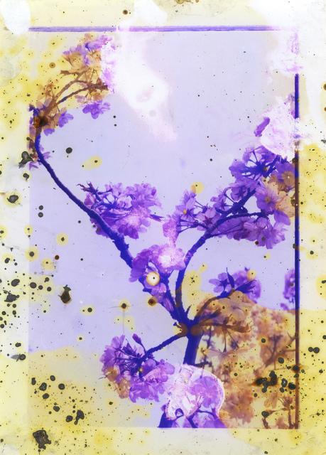 , 'Untitled III, (Lunar Caustic),' 2014, Flowers
