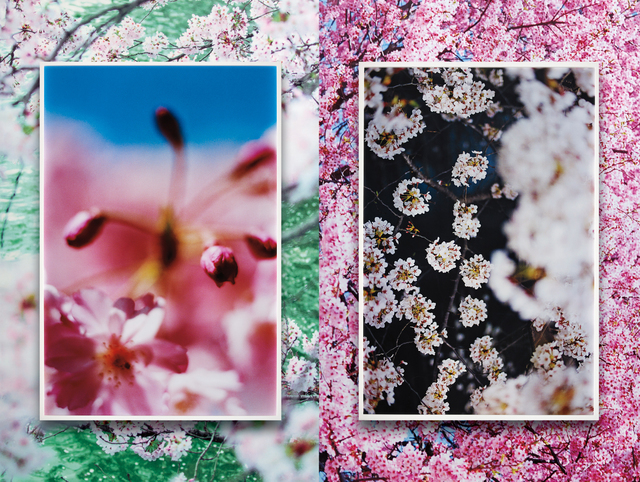 Mika Ninagawa, 'earthly flowers, heavenly colors', executed 2018, Phillips