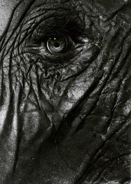 , 'Elephant eye,' 1993, Galerie Peter Sillem