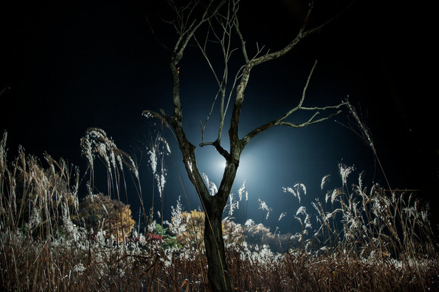 , 'The lights are set, n.1,' 2008, ILEX Gallery