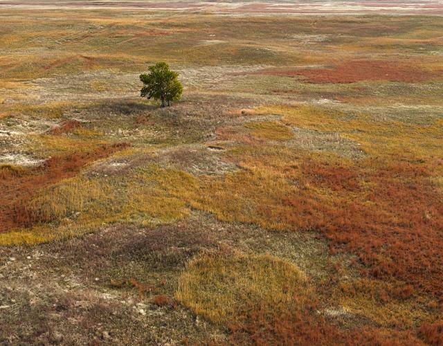 , 'Autumn Grasses, Sheridan County, Nebraska,' 2013, Kopeikin Gallery