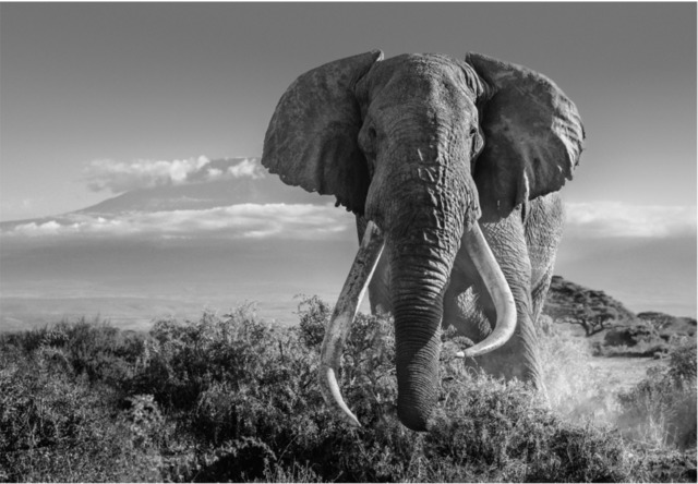 David Yarrow, 'Africa II', 2018, Maddox Gallery