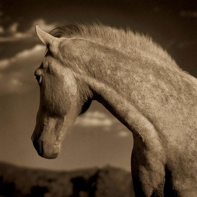Michael Eastman, 'Horse #1', 2000, Duane Reed Gallery