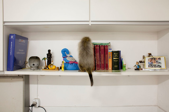 , 'Porco Espinho (from the series Zoo),' 2015, Zipper Galeria